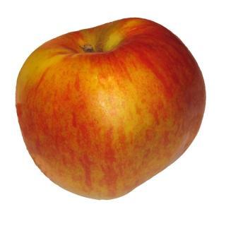 Apfel Santana  ´65+
