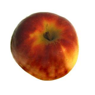 Apfel Roter Elstar