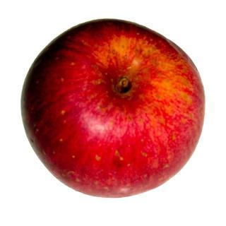 Apfel Royal Jonagold Bioladen